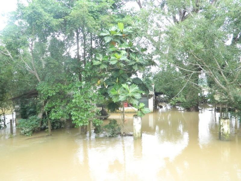 Quảng Nam thiệt hại 220 tỉ, Quảng Ngãi ngập nặng - ảnh 1