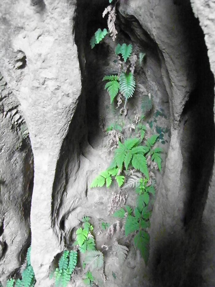 Tìm thấy loài cây có nguy cơ tuyệt chủng ở Phong Nha - ảnh 1