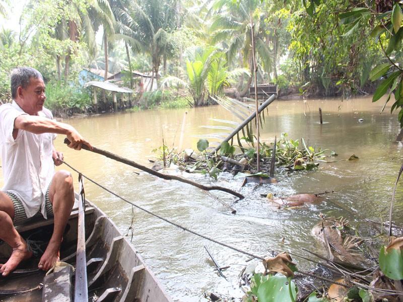 Xác heo chết vì dịch nổi đầy trên sông ở Bến Tre - ảnh 1