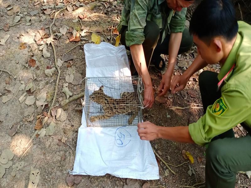 Bàn giao cá thể tê tê, khỉ, mèo rừng quý hiếm về khu bảo tồn - ảnh 2