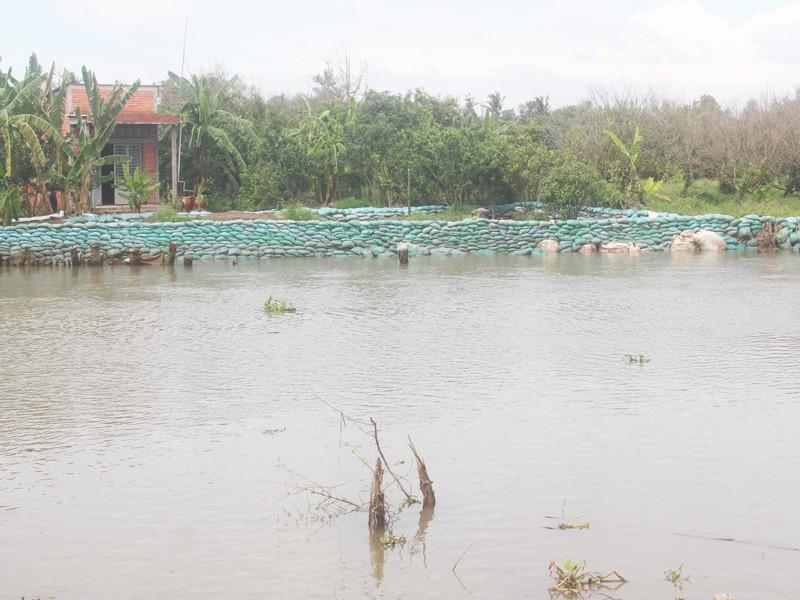Tháo dỡ đập tạm sông Ba Lai gây sạt lở 150m lộ và đê bao - ảnh 4