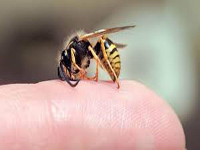 'Thầy lang' chữa bệnh bằng cách cho ong mật đốt làm chết người - ảnh 1