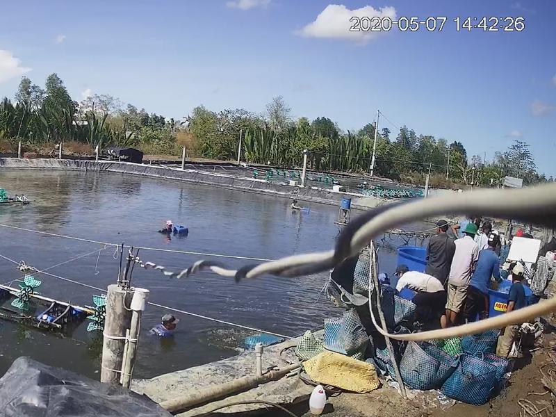 Nhóm thương lái trộm tôm ở Cà Mau: Khởi tố 19 người - ảnh 1
