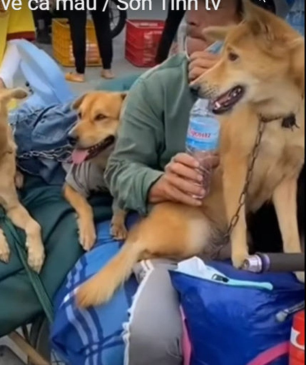 Chủ tịch huyện trực tiếp làm rõ vụ 15 con chó bị tiêu hủy ở Cà Mau - ảnh 1