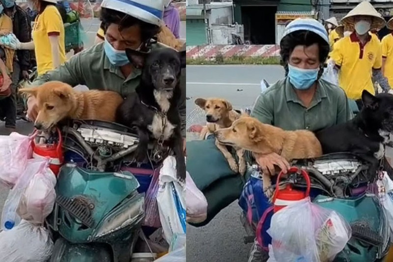 Trưởng trạm y tế liên quan vụ tiêu hủy chó mèo xin nghỉ phép dài hạn - ảnh 1